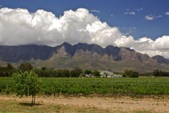 Vineland estate in mountains of south africa. Lanscape- vineland estate against mountains south africa Stock Photos