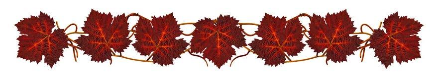 VineLeavesStrip3 Stock Foto's