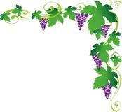 Viner Arkivfoto