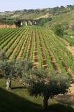 vinery моста Стоковая Фотография RF