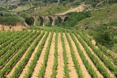 Vinery and bridge. Vineyard on sicily - with ancient bridge in the background Stock Photos