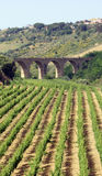 Vinery and bridge view. Vineyard on sicily - with ancient bridge in the background Royalty Free Stock Image