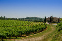 The vinery and farm of Tuscany Stock Photography