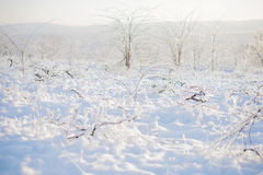 Vinery in Ice and Snow Royalty Free Stock Photo
