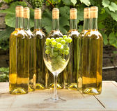 Vinery Still Royalty Free Stock Images
