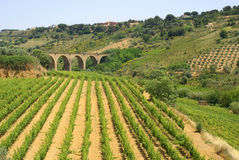 Vinery view. Vineyard, on sicily - with ancient bridge in the background Stock Photos