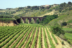 Vinery view. Vineyard with ancient bridge in the background Royalty Free Stock Image