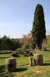 Vinery. Winery near San Gemignano in Italy Royalty Free Stock Photography