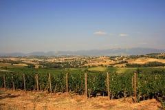 Vines stock photos