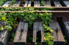Vines on abandoned railway Royalty Free Stock Image