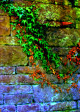 Vines Along Wall. Vivid vines overtaking an old stone wall Royalty Free Stock Photo
