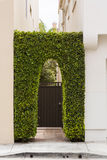 Vines around gate Royalty Free Stock Photo