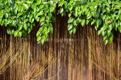 Vines background Stock Image