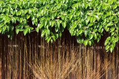 Vines background Royalty Free Stock Photo