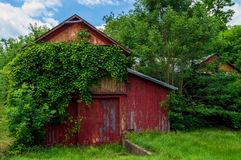 Vines on Barn Stock Photos
