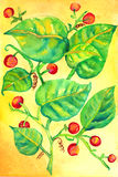Vines berries. Green vines and red berries watercolor painting Royalty Free Stock Photos