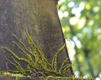Vines and Bokeh on wood in British Columbia Stock Photo