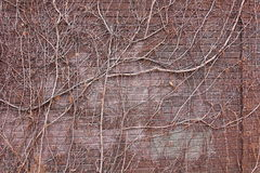Vines & Branches over Brick Stock Image