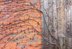 Vines Brick & Barn Board Stock Photo