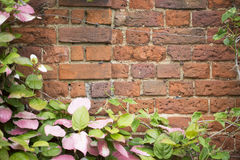 Vines on Brick Wall Stock Photo