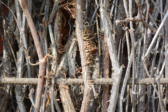 Vines Royalty Free Stock Photography
