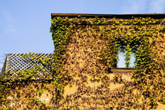 Vines covering house Stock Image