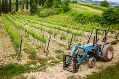 Vines on the field and a blue tractor Stock Photos