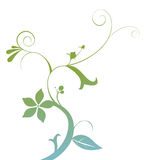Vines and flower. Illustration drawing of beautiful green vines and flower Royalty Free Stock Images