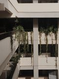 Vines. Hanging down from balcony Stock Images