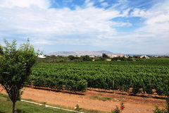 Vines and hills. Jerez de la Frontera, Spain Royalty Free Stock Photo