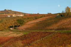Vines and hills in Langhe. Italy Stock Photography