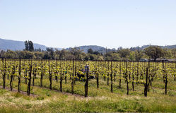 Vines and Hills Royalty Free Stock Photos