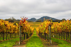 Vines hills Stock Photo