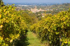 Rows of vine lambrusco autumn colors wine festival of grape. Rows of vine lambrusco autumn colors vineyards in aurtunno hills of lambrusca castelvetro di modena stock photography