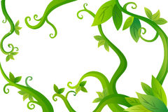 Vines and leaves Royalty Free Stock Photos