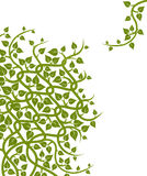 Vines and leaves. Drawing of green vines and leaves in a white background vector illustration