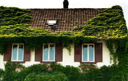 Vines leaves on house Royalty Free Stock Image