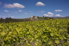 Vines in Montepulciano, Tuscany Stock Photo