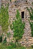 Vines on old castle wall Stock Photos