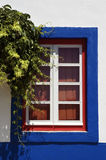 Vines outside windoe. A blue rimmed window with overhanging vines in Portugal Royalty Free Stock Image
