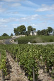 Vines at Pauillac France Royalty Free Stock Photography
