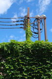 Vines on Power Lines Royalty Free Stock Image