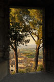 Vines at San Giminiano in Toscany Stock Photo
