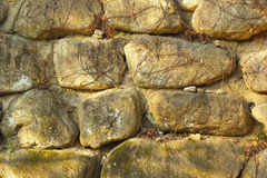 Vines on a stone background Royalty Free Stock Photography