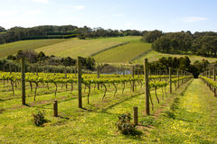 Vines in Summer Stock Images