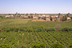Vines Village. Vines agriculture on harvest time in El-Minya, Egypt Stock Photography