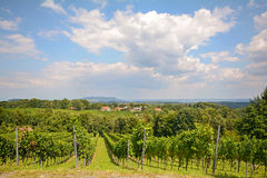 Vines in a vineyard in autumn - Wine grapes before harvest, South Styria Austria Stock Photos