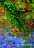 Vines on Wall. Wall being overtaken by vines, colorful, surreal technique Royalty Free Stock Images