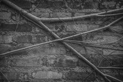 Vines on a wall Royalty Free Stock Photos