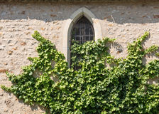 Vines on Wall Stock Images